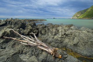 Meereskueste, zerklueftete Felsen und ein angeschwemmter Baumstamm entlang der Kuestenlinie bei Kaikoura, Kaikoura, Canterbury, Suedinsel, Neuseeland Seascape, rugged rocks and tree trunk washed ashore along the coastline of Kaikoura, Kaikoura, Canterbury