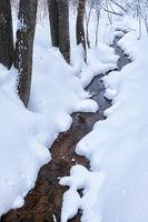 Small winter stream among poplar trees under snow in winter
