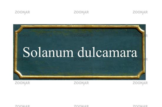 shield Solanum dulcamara