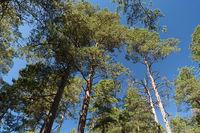 Forest and heathland in Sweden