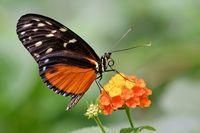 1 BA Schmetterling 13 neu.jpg