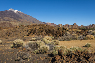 El Teide Tenerife with Bush