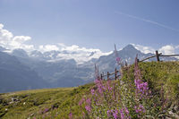 Landscape idyll in the Montblanc area