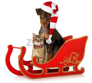 Welpe und Kätzchen mit Weihnachtsschlitten