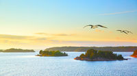 Scandinavian landscape with sea gulls