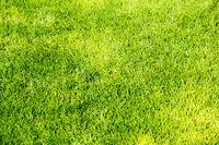 Short green grass background