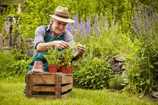 Man herbs Crate