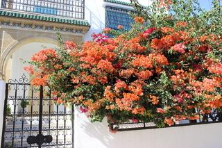 Blühende Bougainvillea vor einer tunesischen Villa