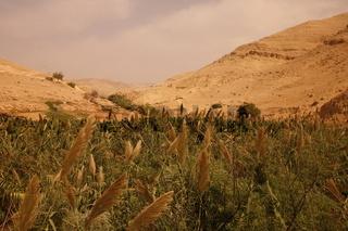 Die Landschaft mit Wueste und einer Oase zwischen der Stadt Salt und dem Berg Nebo westlich der Hauptstadt Amman im norden von Jordanie