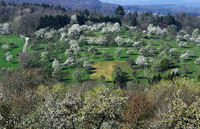 meadow orchard; spring;