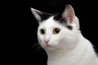 1 BA Katze freigestellt .jpg