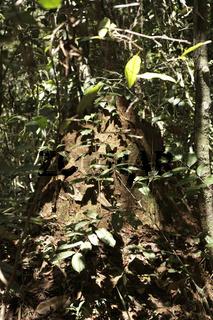 Termitenhügel, Bahia, Brasilien, Südamerika