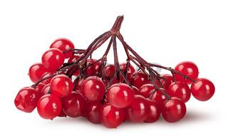 Bunch of ripe viburnum