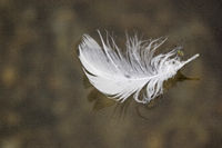 Feather-like find piece