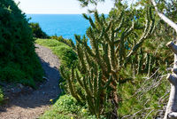 Narrow mountain footpath. Portman village, located between La Manga Club and Cartagena city. Spain