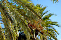 Leaves of a palm tree against blue sky