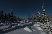 Moonlit winter landscape, Muddus National park, world heritage Laponia, Lapland, Sweden