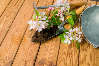 Branch of blossoming apple and garden tools on a wooden surface, close-up