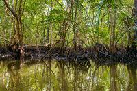 Mangrove in Indonesia