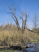 Hanover - Wetland, Leinemasch, Germany