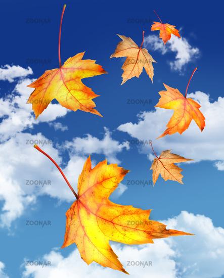 Осень, славная хозяюшка...