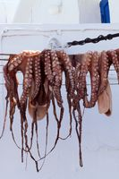 Octopus hanging up to dry in the sunshine on a Greek island