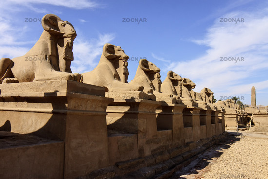 Egypt Luxor Avenue Of Sphinxes