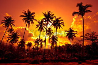 Coconut palms on sand beach in tropic on sunset. Thailand