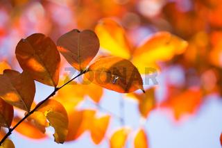autumn season leaves on a tree in sun light
