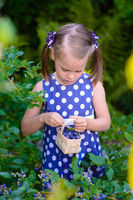 Little girl picking fresh berries on blueberry field - on organic farm. Cute gardener girl playing outdoors in fruit orchard. Toddler gardening. Preschooler farming. Summer family fun.
