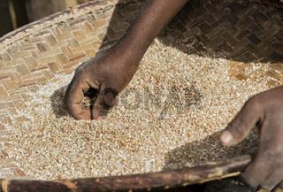 Reinigen der ausgesiebten Reiskörner, Ambavaniasy, Madagaskar