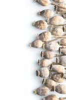 Dried poppy heads.