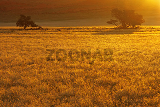 Abendlicht in Namibia, evening light in Namibia
