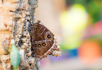 Tropical butterfly sitting on a tree trunk