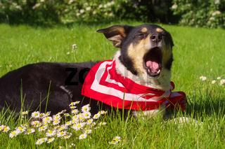 Müder Hund im Gras