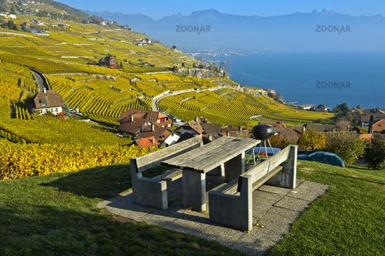 Lavaux vineyards in golden autumn foliage at Lake Geneva, Rivaz, Lavaux, Vaud, Switzerland