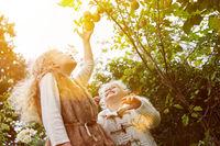 Zwei Mädchen ernten Äpfel im Herbst