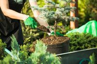 Florist-woman working with seedlings