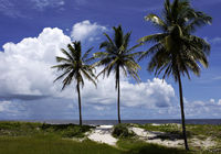 Palms on the beach of Ilha Atalaia, Praia da Costa, Canavieiras, Bahia, Brazil, South America