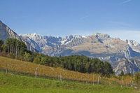 Weinfelder vor vor den mächtigen Gipfeln der Brentagrüppe