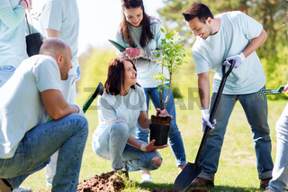 group of volunteers planting tree in park