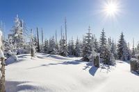 winter in bavarian forest