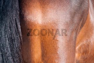 Pferdehaar
