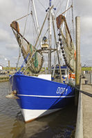 Fishing boats in the harbour, Dorum-Neufeld, Lower Saxony, Germany, Europe