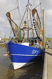 Fischerboote im Hafen, Dorum-Neufeld, Niedersachsen, Deutschland, Europa