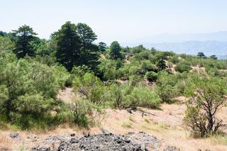 overgrown slope of Etna volcano in Sicily