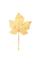 Autumn leaves on neutral background