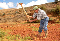 Farmer in field work, South America