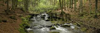 Bach im Nationalpark Bayerischer Wald, Creek in Bavarian forest national park