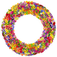 Summer floral circles  isolated
